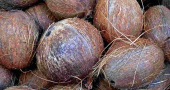 Sustainable coconut oil project for Philippines and Indonesia