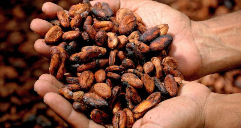 Cocoa supply chain: model of sustainability