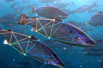 Aquaculture industry: sustainability with artificial intelligence