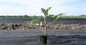 Additives for biopolymers certified for industrial compostability