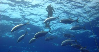 Plant-based seafood alternatives to protect biodiversity of oceans
