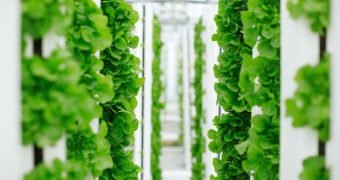 Vertical farming in mega-cities. Is it the future of food?