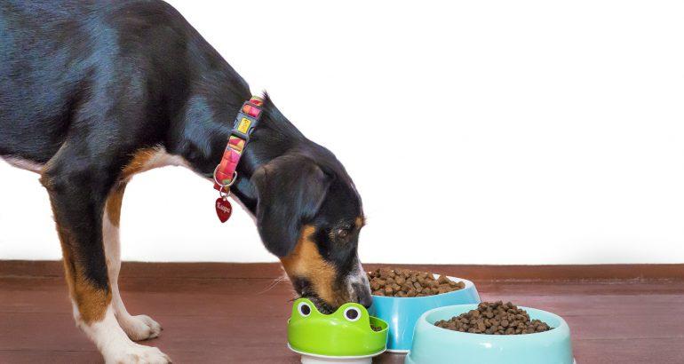 Circular primary packaging: TRUCIRCLE for pet food