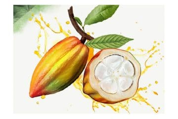 WholeFruit chocolate: the expression is Evocao. Ingredient 100% cacao fruit