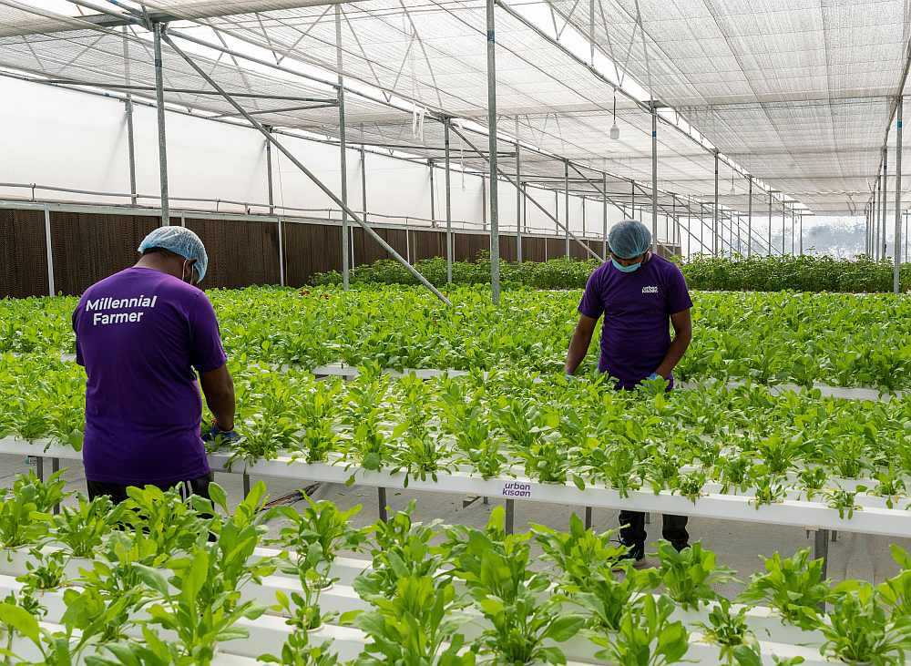 Hydroponic cultivation UrbanKisaan
