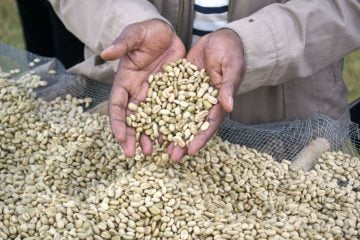 DA MultiVision optical sorter: saved costs boosting export in coffee market