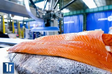 Salmon handling with special gripping tool for robotic application